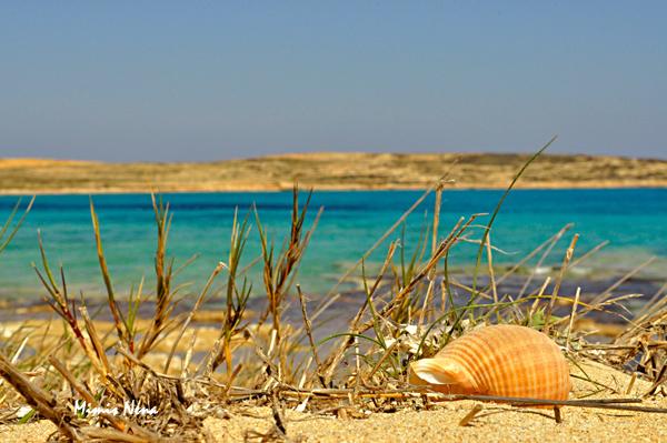 Shell on Pori Beach - Koufonissia
